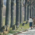 7000 Oaks — City Forestation Instead of Josephy Beuys, City Administration (German: 7000 Eichen — Stadtverwaldung statt Stadtverwaltung)(1982-1987)